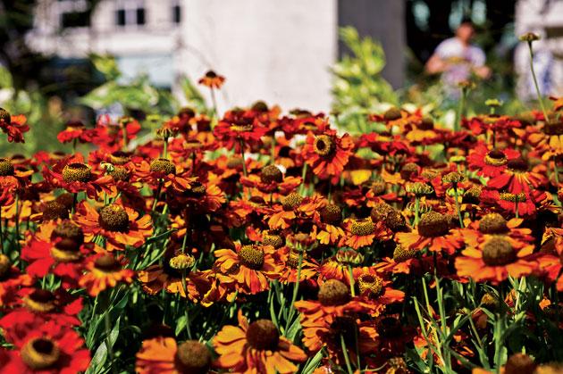 76W-Orange-Flowers