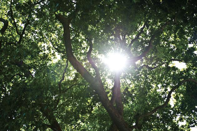 76W-Trees